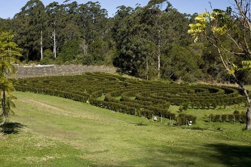 Bago Maze
