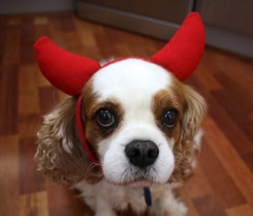 Best Friend Delights, doggy treats, Riley