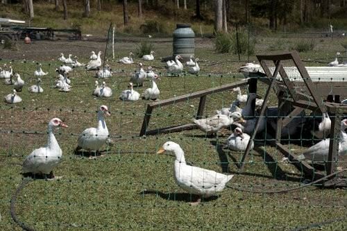 Gaian Poultry & Game Port macquarie