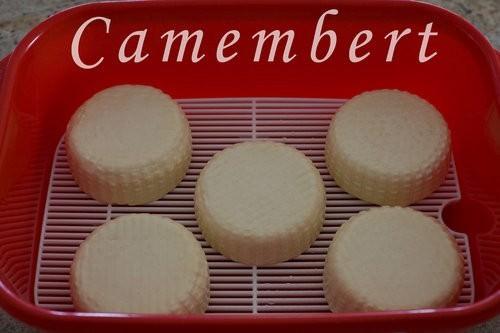 Homemade Camembert