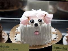 Maltese Terrier Cake