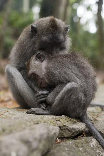 Monkey Forest Ubud, Bali-2