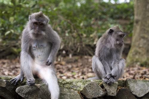 Monkey Forest Ubud, Bali-3