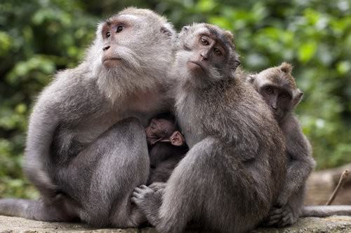 Monkey Forest Ubud, Bali-4