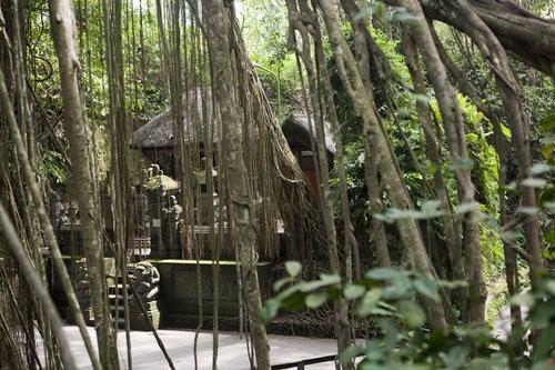 Monkey Forest Ubud, Bali-5