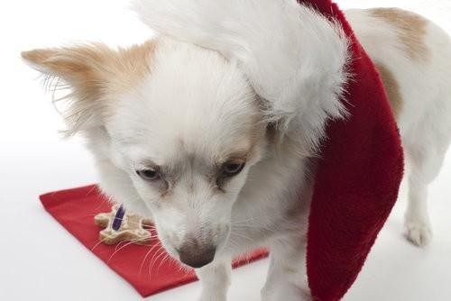 Sofi, Best Friend Delights, doggy treats-10