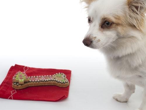 Sofi, Best Friend Delights, doggy treats-3