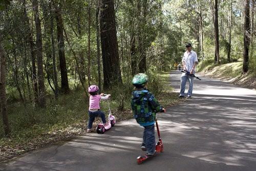 Gold Coast Hinterland -Cedar Falls Walk