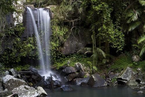 Gold Coast Hinterland -Curtis Falls
