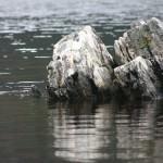 A Rock in Dove Lake