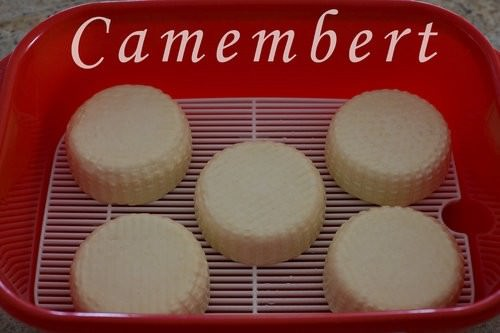 Homemade Camembert