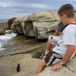 Penguin Colony at Bicheno