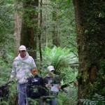 Dismal Swamp Walk