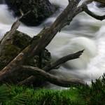 Guide Falls Tamar Valley
