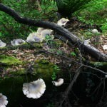 Dismal Swamp Mushrooms