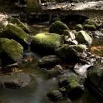 Mosman Gorge Image