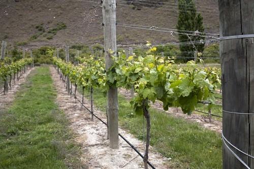 Queenstowns Best Vineyards