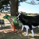 Ashgrove Cheese Painted Cows
