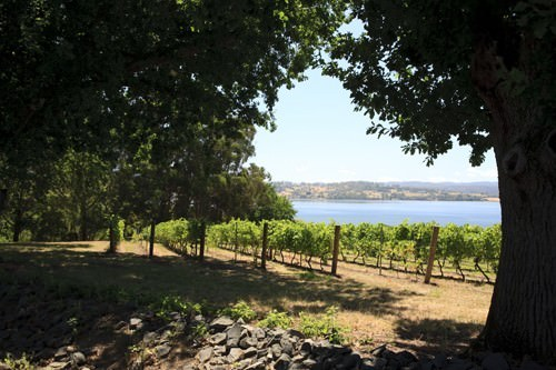 Tamar Valley Wineries