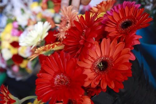 Gerbras - Flower Display