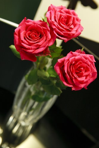 Red Roses in the Room