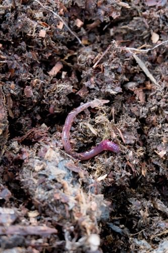 Tender Loving Care  - Vermiculture