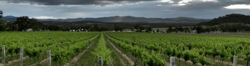 Top 5 Australian Vineyards - 2