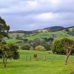 Top 5 Australian Vineyards - 3