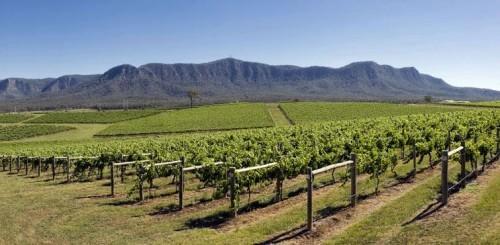 Top 5 Australian Vineyards - NSW