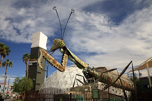 Grasshopper At The Container Park Las Vegas