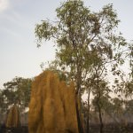 Termite Mounds on The Old Telegraph Bypass Track