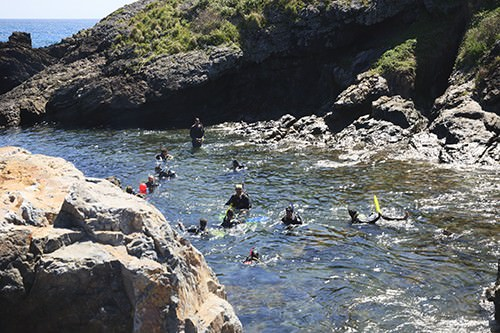 Snorkelling at Northwall