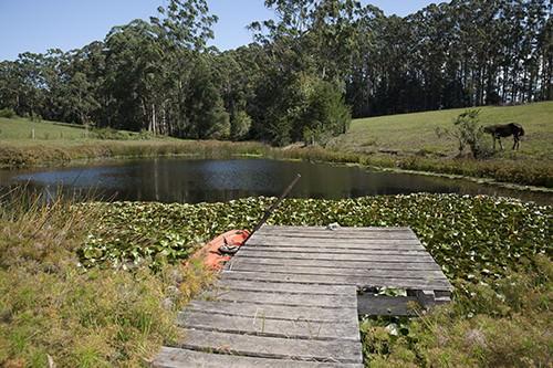 Blueberry Farm Dam