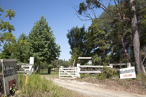 Blueberry Farm Gates