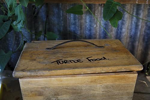 Turtle Food Box