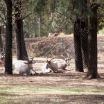 Taronga Western Plains - Dubbo Zoo