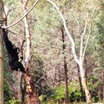 Monkey Dubbo Zoo