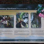 Rainforest Plants National Park